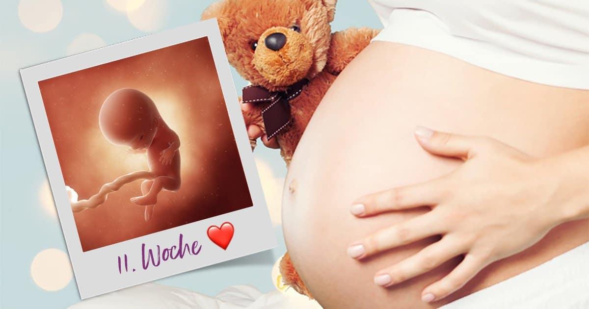 11. SSW (Schwangerschaftswoche)