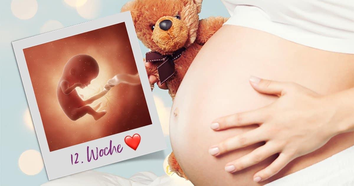 12. SSW (Schwangerschaftswoche)