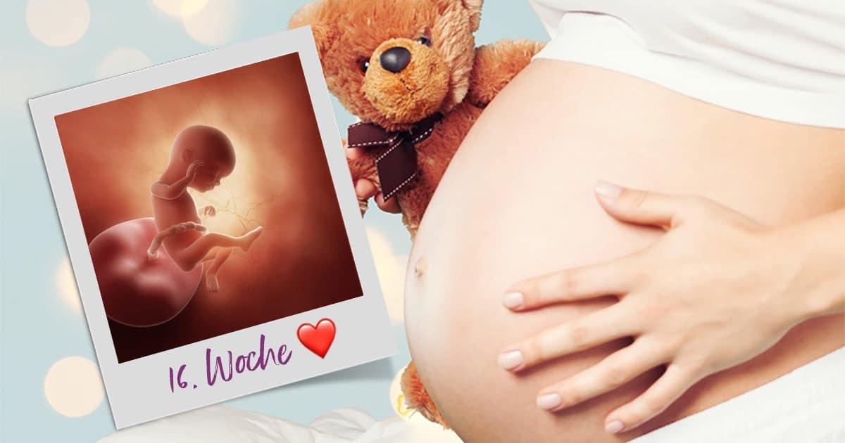 16. SSW (Schwangerschaftswoche)