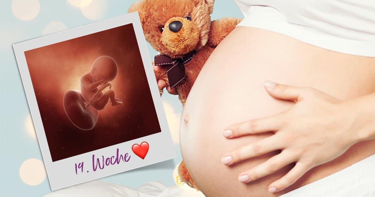 19. SSW (Schwangerschaftswoche)
