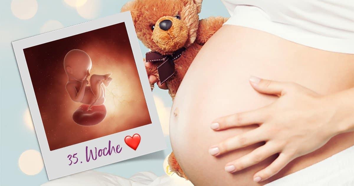 35. SSW (Schwangerschaftswoche)