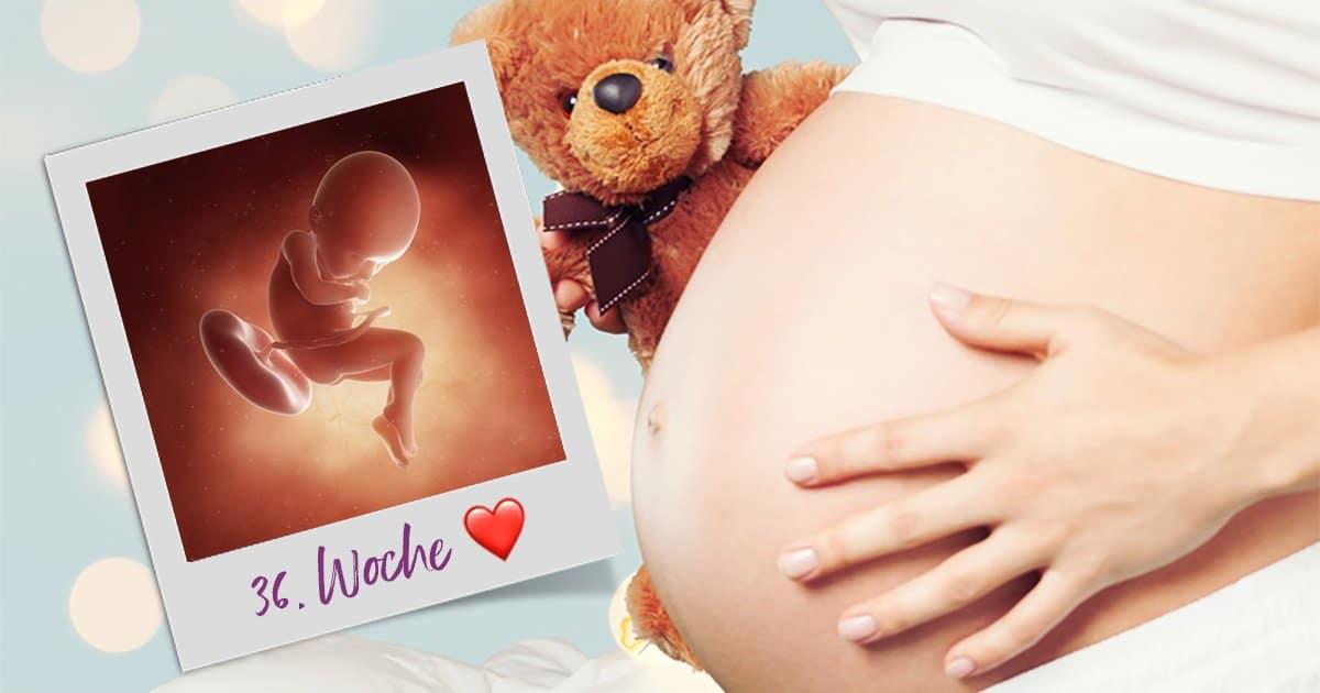 36. SSW (Schwangerschaftswoche)