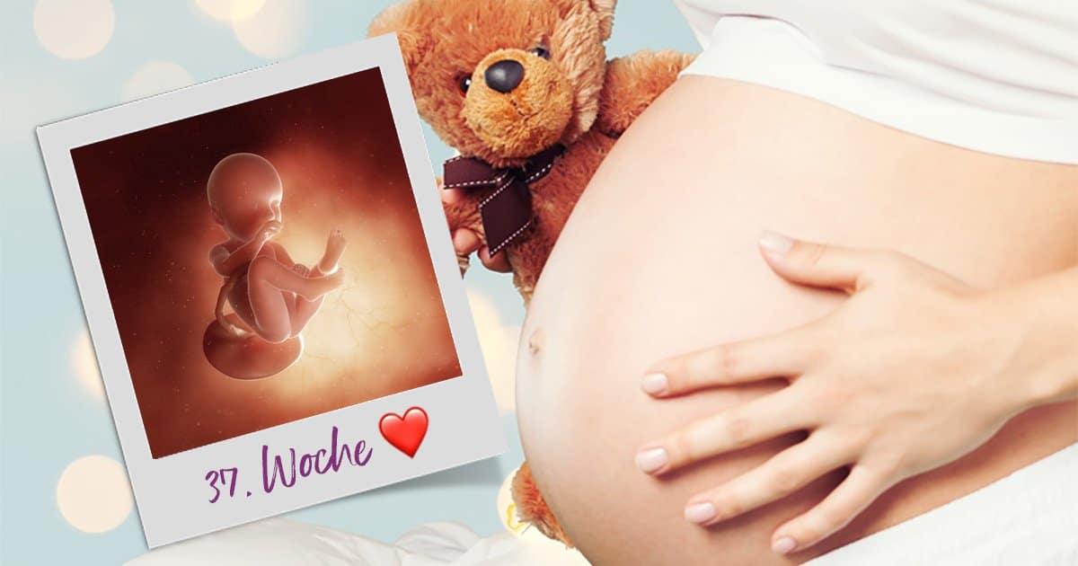 37. SSW (Schwangerschaftswoche)