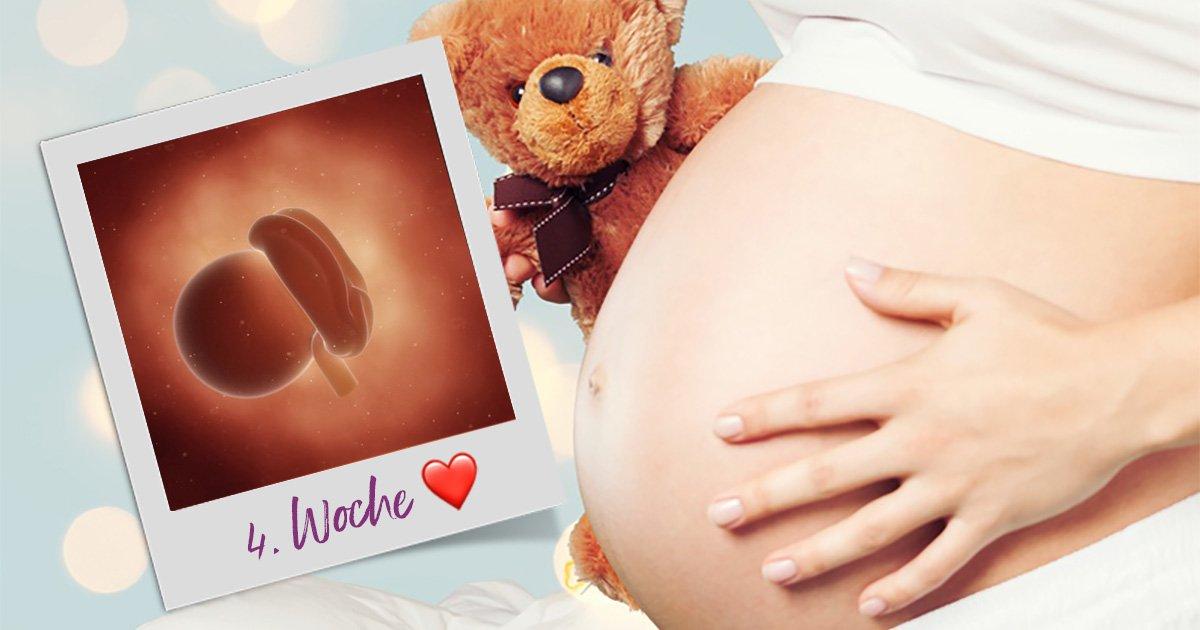 Die 4. SSW (Schwangerschaftswoche)