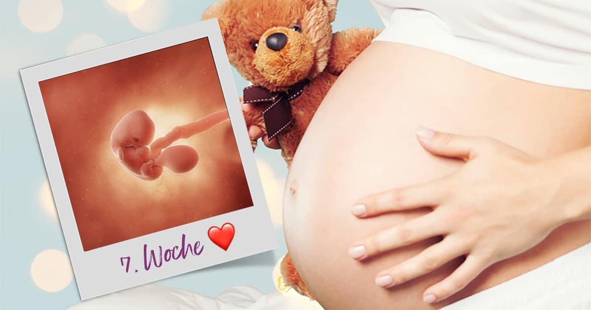 7. SSW (Schwangerschaftswoche)