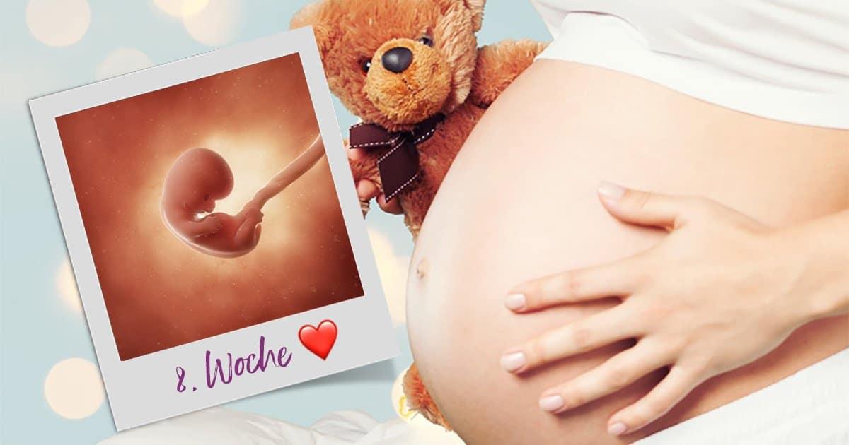 8. SSW (Schwangerschaftswoche)