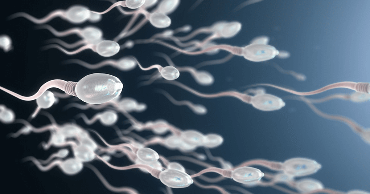 Insemination Samenübertragung