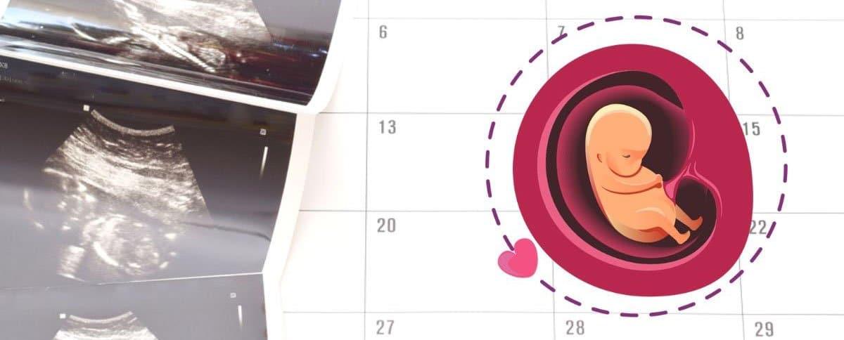 Unser neuer SSW-Rechner (Schwangerschaftswoche berechnen)